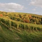 Bockstein im Herbst klein