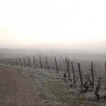Winterpanorama 1_2